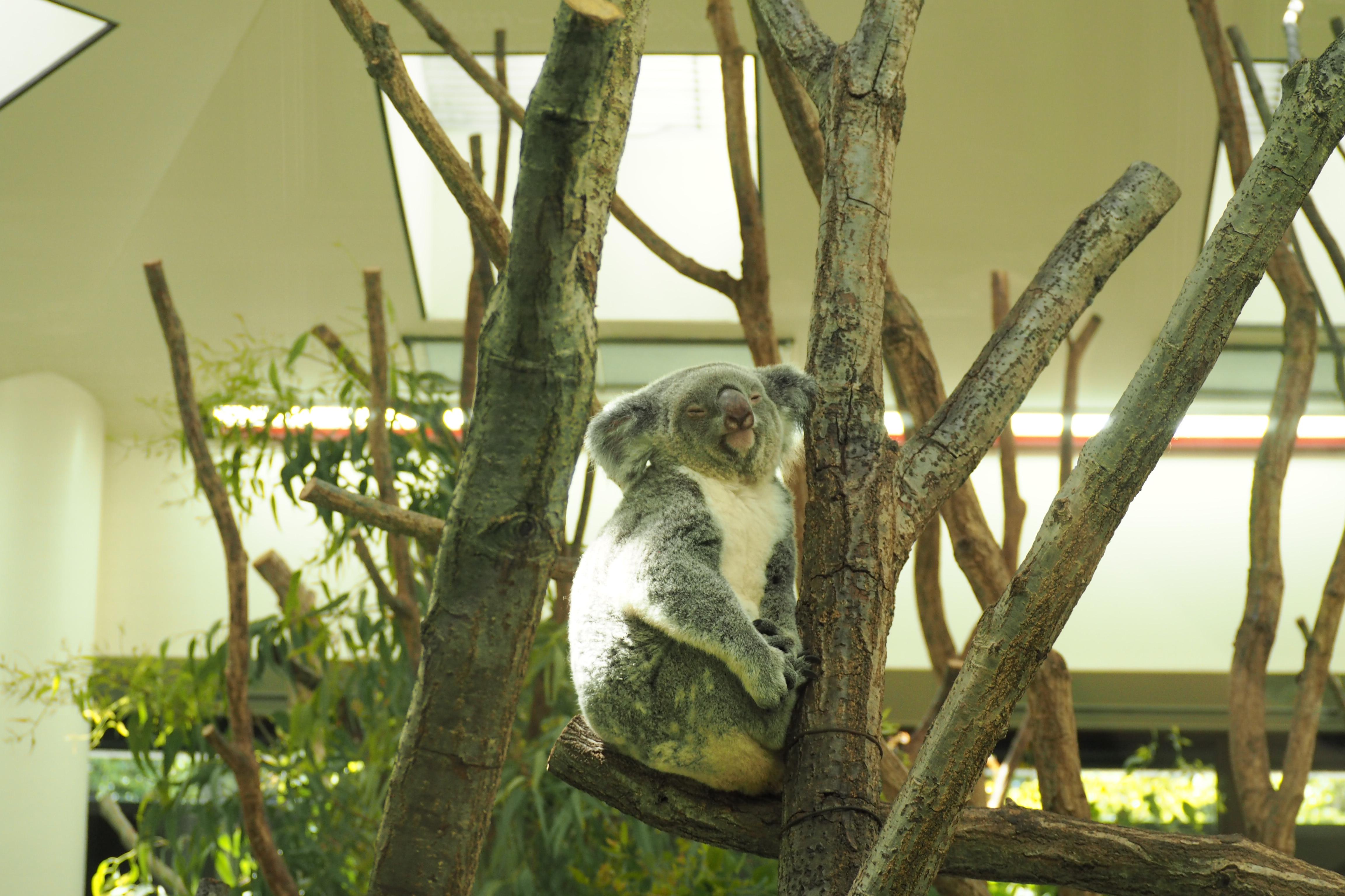東松山市高坂:こども自然動物公園